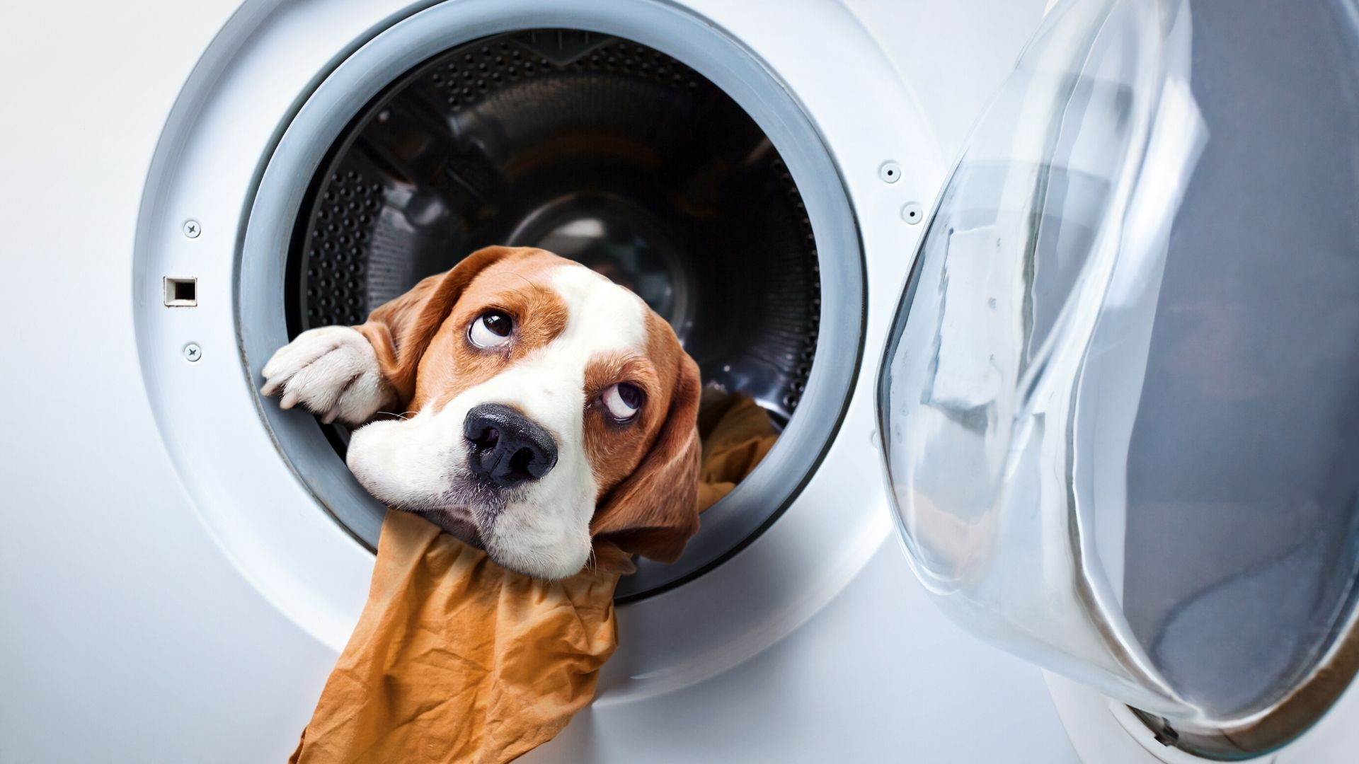 The Old Cycle Dog in a washing machine